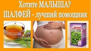 Не получается ЗАБЕРЕМЕНЕТЬ?  ШАЛФЕЙ - лучший помощник! Salvia (sage) - a cure for infertility