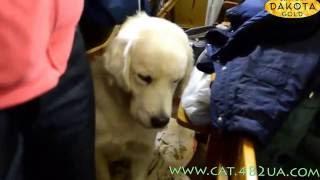 Выставка собак, Харьков, 30 октября 2016, видео 7