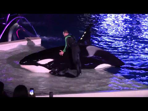 Shamus Celebration Light Up the Night Full Show at SeaWorld