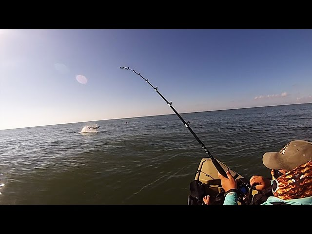 Offshore Kayak Fishing: Spinner Sharks at the Dirty Pelican!!!