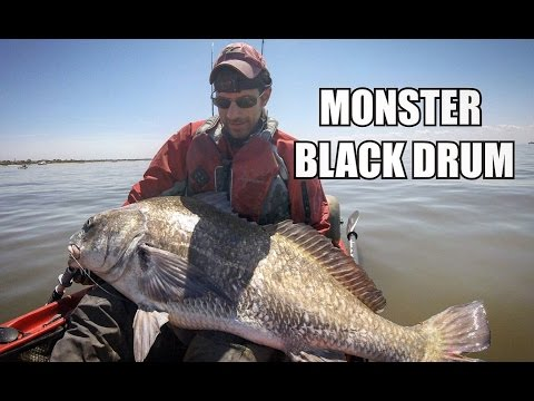 The LARGEST Fish Of My Life! RIDICULOUS Kayak Fishing For MONSTER Black Drum!!