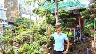 Chợ cây cảnh Vạn Phúc - Hà Đông, duối độc đáo, quá đẹp, tùng la hán giá hợp lý - bonsai market