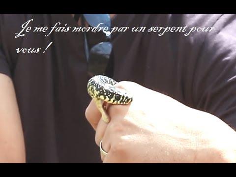 Je me fais mordre par un serpent pour vous | couleuvre verte jaune