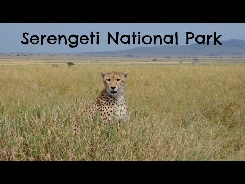 Serengeti National Park | Tanzania Safari Travel Diary Day 3, 4 & 5 | Ali Coultas