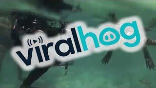 Swimming with a Saltwater Crocodile || ViralHog