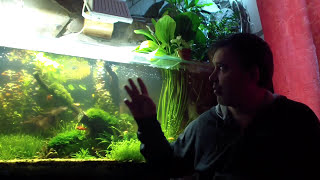 cidex в аквариуме от водорослей 4 день