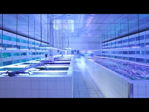 CLEANEST Fish Store Tour *SECRET*
