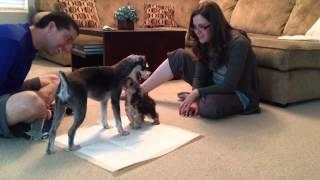 Milo Meets Bailey!!