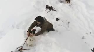 охота на лисьицу с норными собаками