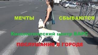 Лабрадор и хаски. Послушание. Дрессировка собак в Новосибирске