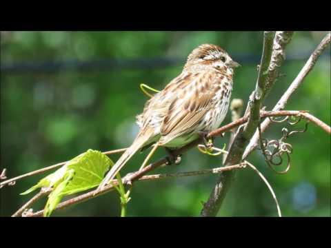 birding adventure in Eastern Ontario, Canada