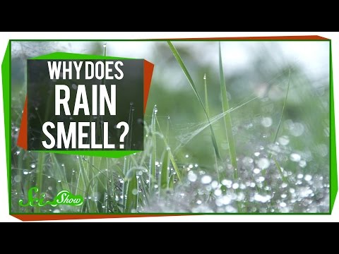 Why Does Rain Smell?