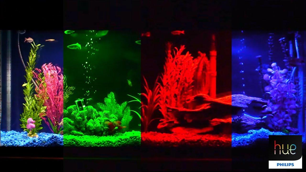 Philips Hue Lightstrip Plus Aquarium LED RGB Light Retrofit - YouTube