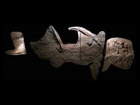 """Texas """"Supershark"""" Fossils Discovered"""
