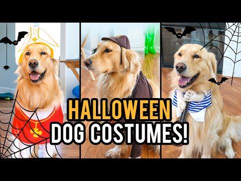 TESTING FUNNY DOG COSTUMES Ft. JUPITER! ?Natalies Outlet