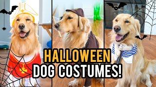 TESTING FUNNY DOG COSTUMES Ft. JUPITER! 🐶Natalies Outlet