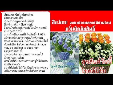 ลือว่อน! งดแชร์ภาพดอกไม้ผ่านไลน์ หวั่นผิดลิขสิทธิ์ #สดใหม่ไทยแลนด์  ช่อง2