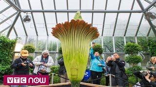 Chiêm ngưỡng loài hoa 10 năm nở một lần | VTC1