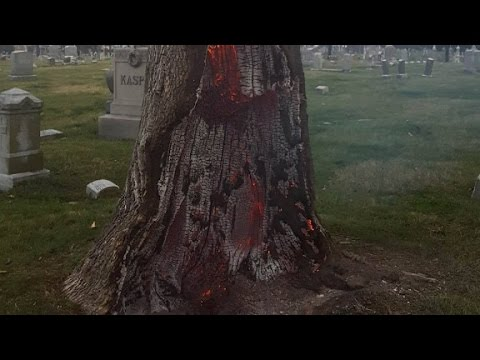 Lightning strike causes tree trunk to explode