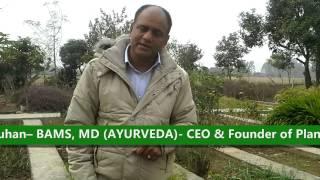 Shatavari ( Asparagus racemosus) Benefits and Uses thumbnail