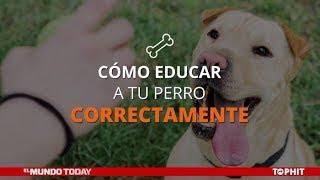 Cómo educar a tu perro correctamente | El Mundo Today 24H