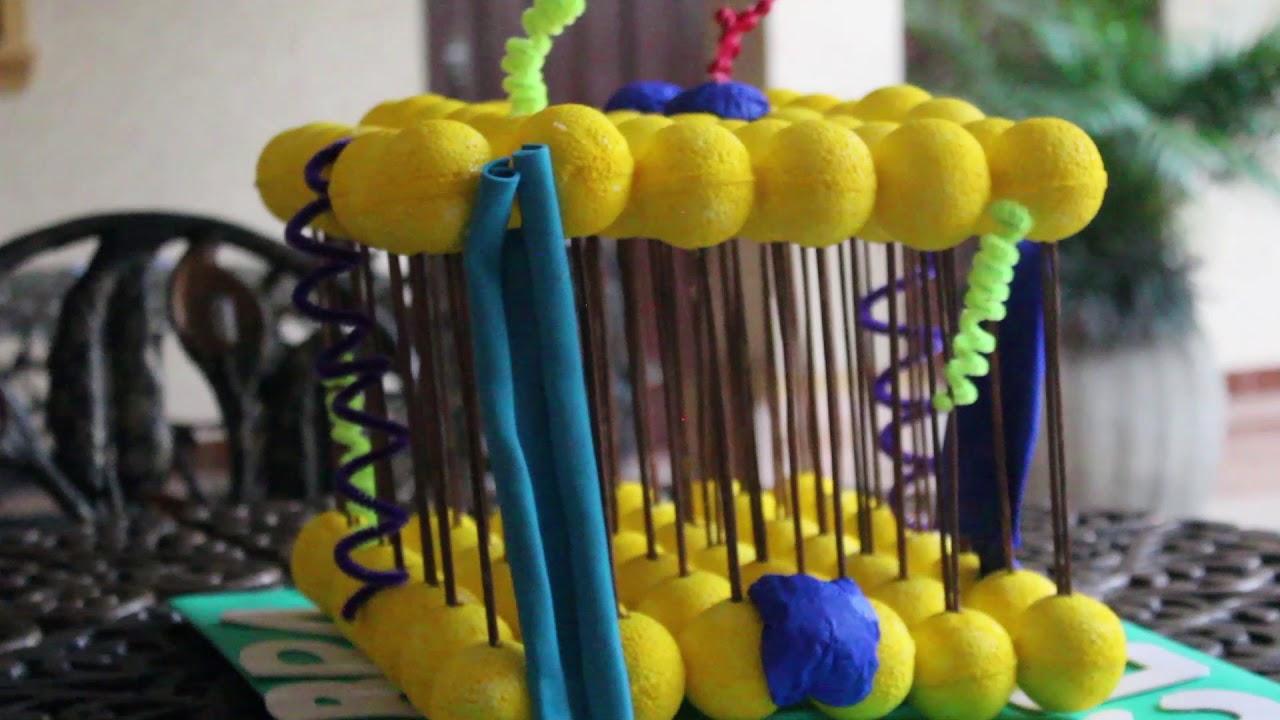 Membrana Celular Modelo De Mosaico Fluido Youtube