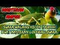 Suara Walang Kecek Jernih  Mp3 - Mp4 Download