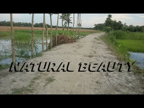 Natural Beauty of Bangladesh-Village Tinchita Amirabad Daudkandi Comilla