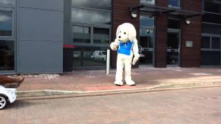 Guide Dogs Nottingham - Funny Electric Car Video