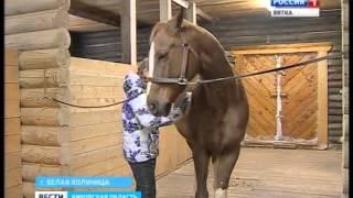 Конный манеж в Белой Холунице (ГТРК Вятка)