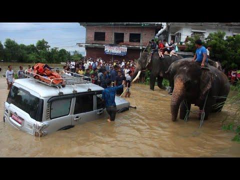 Nepal flooding: elephants rescue stranded tourists