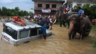 Video Nepal flooding: elephants rescue stranded tourists download MP3, 3GP, MP4, WEBM, AVI, FLV Agustus 2017