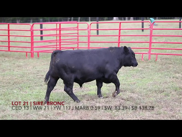 Edgewood Angus Lot 21