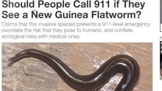Новогвинейские плоские черви замечены во Флориде