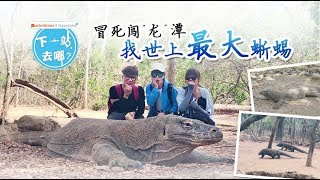 印尼探险之旅:Komodo 岛找世上最大蜥蜴