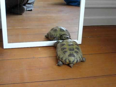 Skildpadder finder sig selv...