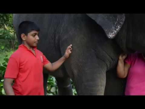 Amazing Love among a Family & an Elephant (පුදුමාකාර වූ අලි මිනිස් ආදර කතාවක්)