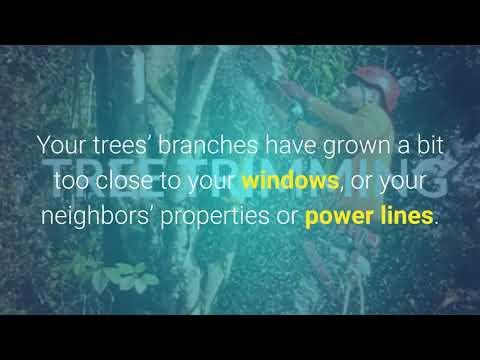 Tree Trimming Kauai | isaiahstreeservice.com | Call us-8086316488