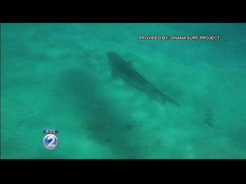 Shark sighting prompts warning signs in Waikiki