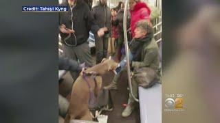 Dog Attacks Woman On Subway