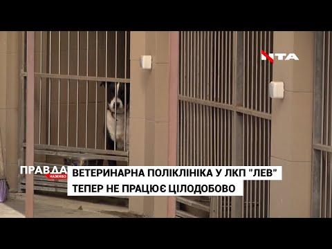 НТА - Незалежне телевізійне агентство: Карантин для чотирилапих: що змінилося для вихованців ЛКП
