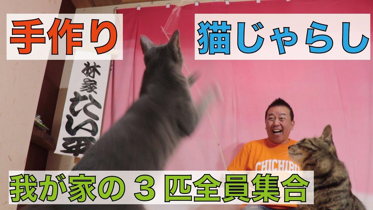 【ネコ全員集合】自作猫じゃらしで大暴れ!?