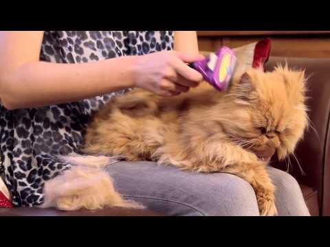 Escovas de muda FURminator para gatos