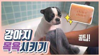 강아지샴푸NO, 강아지 비누로 목욕씻겨 피부촉촉 만들기…