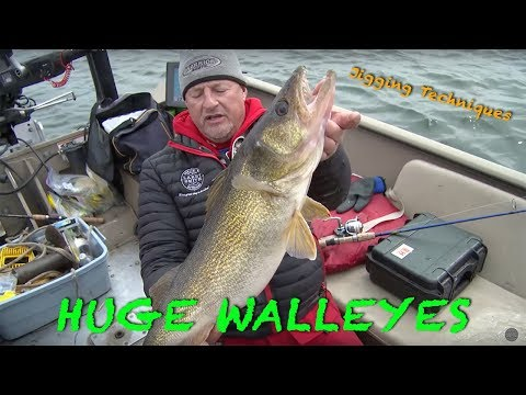 Giant Green Bay Walleyes Pre Spawn - Larry Smith Outdoors