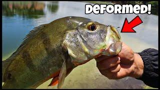 Catching Pet Fish From Small Neighborhood Pond! ft. Joey Slay Em