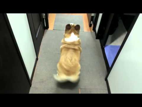 Chó lắc mông siêu dễ thương
