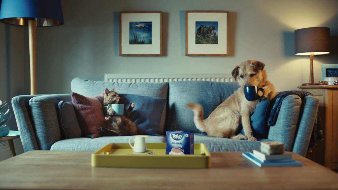 Talking Dog Christmas Commercial 2020 Tetley   Now We're Talking   YouTube