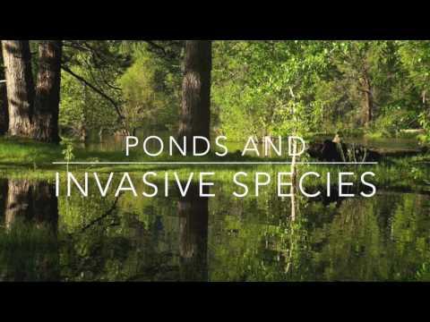 Ponds and Invasive Species (Audio)