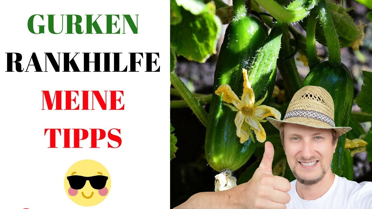 Gurken Rankhilfe Im Pflanzkasten Mein Balkon Garten Youtube